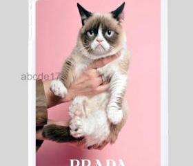 for PRADA Tard the grumpy cat ipad mini case cover !!! MUST HAVE!!! it's just a joke ;-)